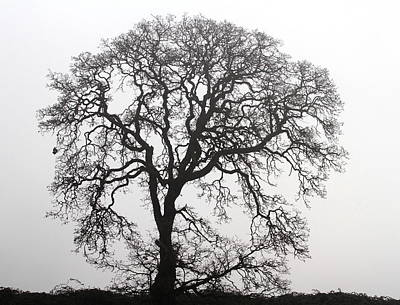 Photograph - Majestic Oak Tree by Angie Vogel