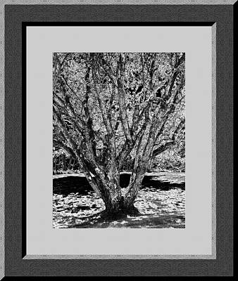 Majestic Tree  Lv Art Print by Daryl Macintyre