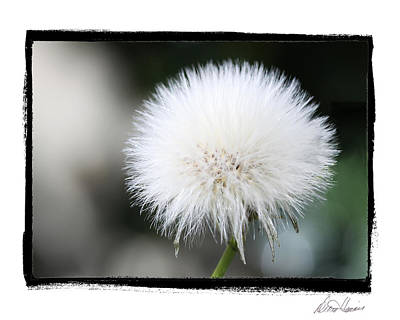 Photograph - Make A Wish by Diana Haronis
