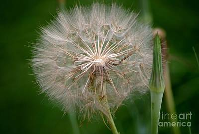 Photograph - Make A Wish by Living Color Photography Lorraine Lynch