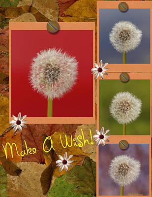 Photograph - Make A Wish by Mick Anderson