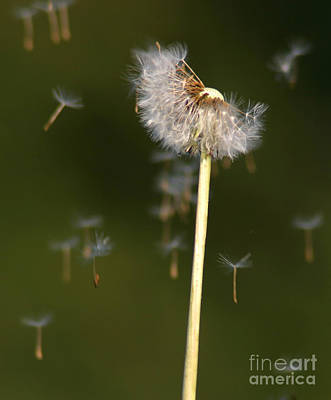 Photograph - Make A Wish by Paul Topp