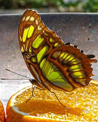 Photograph - Malachite And Orange by Marie Morrisroe