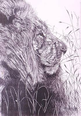 Not In Use Drawing - Male Lion From The Side by Cecilia Putter
