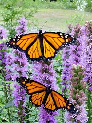 Male Monarchs Art Print by Katie Bauer