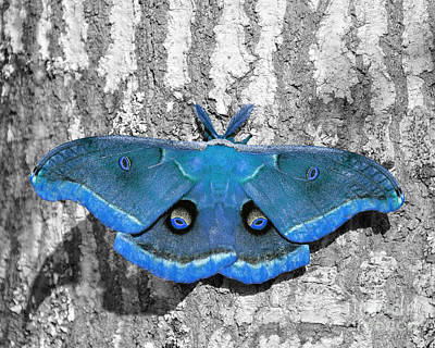 Medium Blue Photograph - Male Moth Light Blue by Al Powell Photography USA
