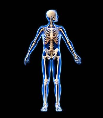 Male Skeleton, Artwork Print by Roger Harris
