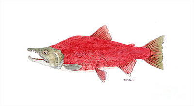 Painting - Male Sockeye Salmon In Spawning Colors by Thom Glace