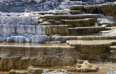 Photograph - Mammoth Hot Springs by Larry Keahey