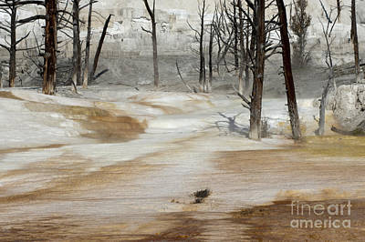 Photograph - Mammoth Terrace Runoff by Sandra Bronstein