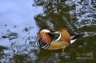 Mandarin Duck 04 Art Print by Arik Baltinester