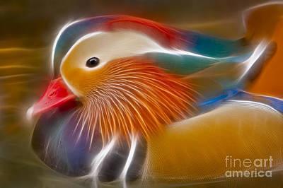 Photograph - Mandarin Glow by Susan Candelario