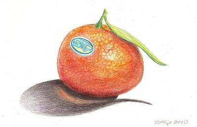 Mandarin Drawing - Mandarin Orange by Sean Paradise