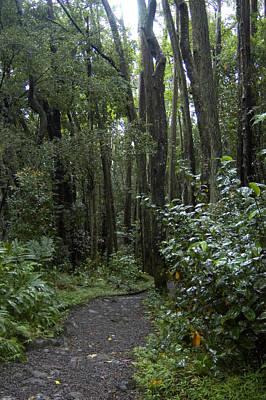 Manoa Falls Hiking Trail In Honolulu Art Print by Stacy Gold