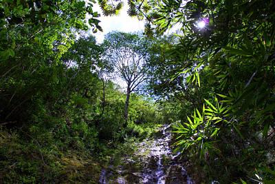 Manoa Falls Photograph - Manoa Rainforest Skylight by Kevin Smith