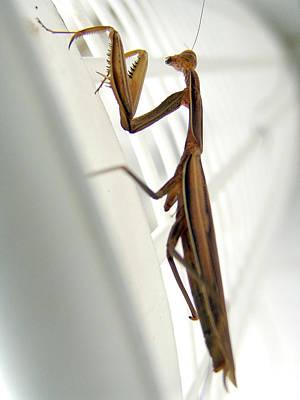 Photograph - Mantis by Alessandro Della Pietra