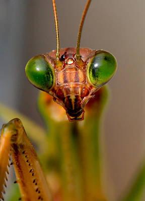 Mantis Eyes Art Print by William Jobes