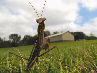 Photograph - Mantis by John Crothers