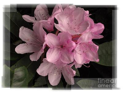 Many Splendored Blooms Art Print by Judee Stalmack