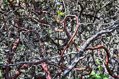 Photograph - Manzanita Tangle by Peter Dyke