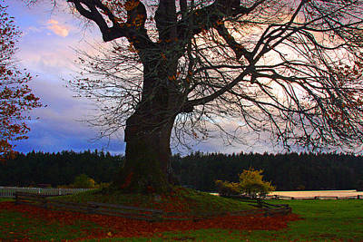 Photograph - Maple Evening by Marie Jamieson