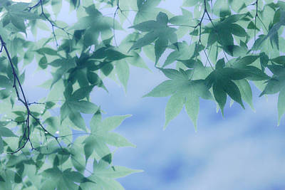 Y120831 Photograph - Maple In Woods by Kaneko Ryo