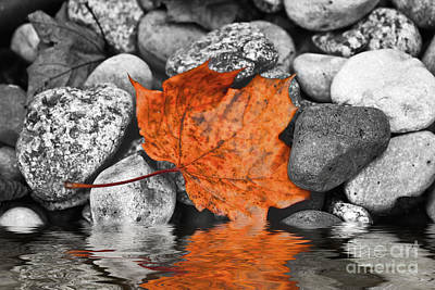 Photograph - Maple Leaf by Ms Judi