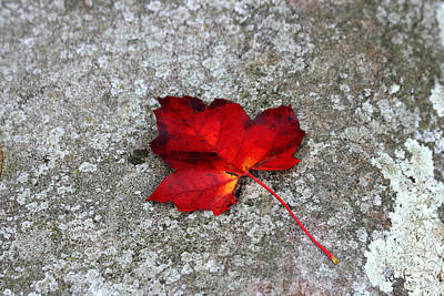 Photograph - Maple Leaf On Granite Rock by George Jones