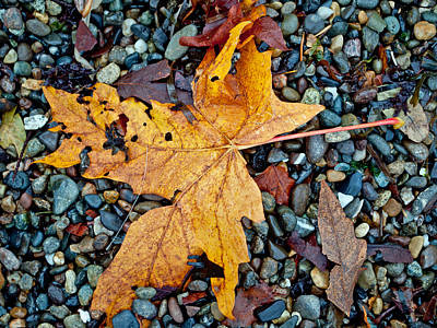 Photograph - Maple Leaf On The Rocks by Tikvah's Hope