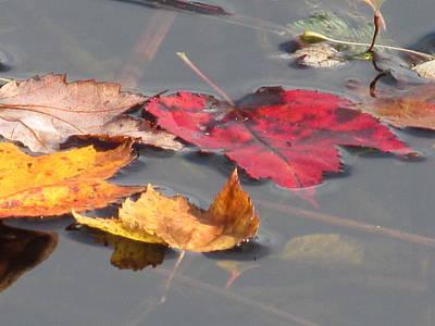 Maple Leaf Reflection Art Print
