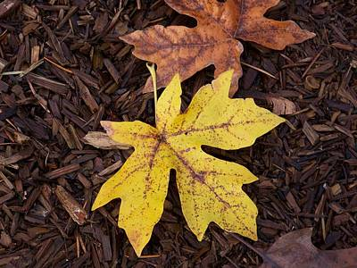 Photograph - Maple Leaf Series Number 3 by Angi Parks