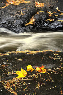 Maple Leaves And Water Art Print