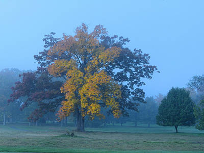 Photograph - Maple Tree In Mist by Leontine Vandermeer