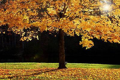 Photograph - Maple Tree In The Fall  by Emanuel Tanjala