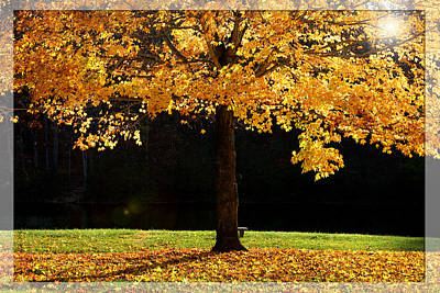 Photograph - Maple Tree In The Fall Time by Emanuel Tanjala