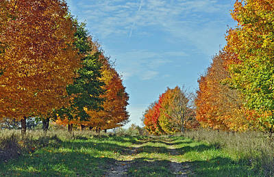 Metamora Photograph - Maple Tree Lane by Rodney Campbell