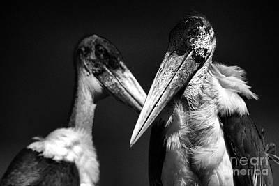 Photograph - Marabou Stork by Mareko Marciniak