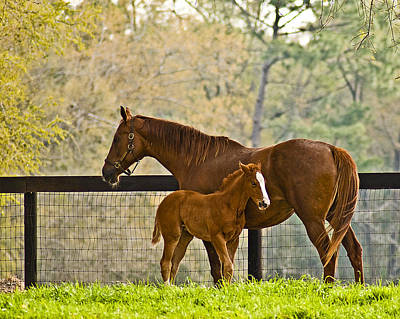 Mare And Foal Art Print by Betty Eich