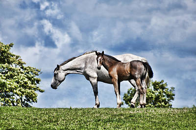 Mare And Foal Art Print by Steve Purnell