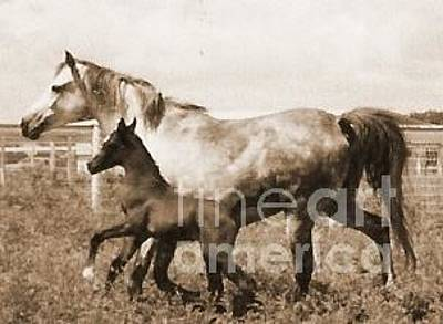 Photograph - Mare And Foal by Vonda Lawson-Rosa