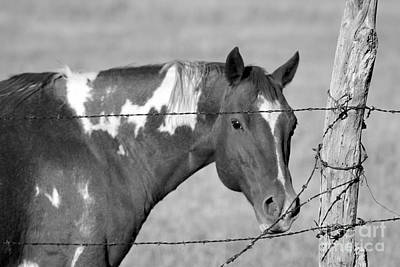 Photograph - Mare In Black And White by Pamela Walrath