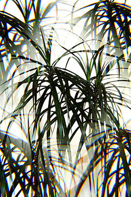 Photograph - Marginata Draceana Abstract by Marilyn Hunt