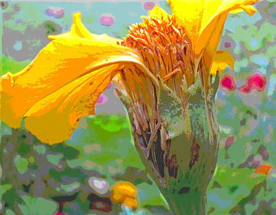 Marigold Going To Seed Art Print