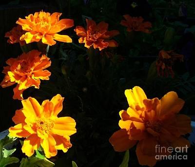 Art Print featuring the photograph Marigold Sunrise by Jim Sauchyn