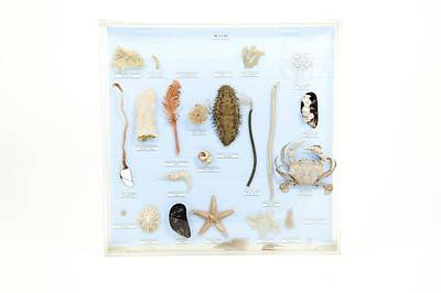 Marine Life Specimens Art Print by Gregory Davies, Medinet Photographics