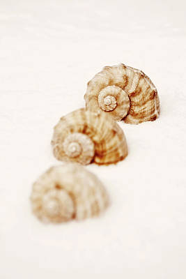 Photograph - Marine Snails by Joana Kruse