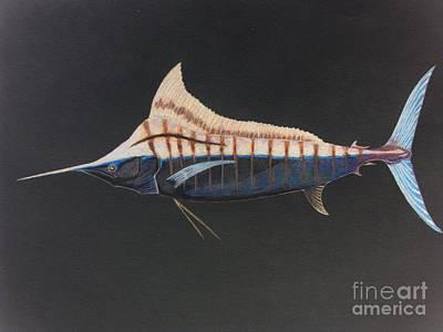 Blue Marlin Drawing - Marlin by Jared Hester