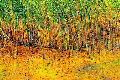 Photograph - Marsh Colors  by Beth Akerman