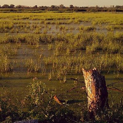 Marsh Photograph - #marsh #goldenhour #android by Nicole Ulrich