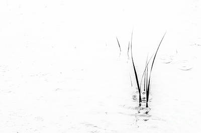 Photograph - Marsh Grass by David Waldrop